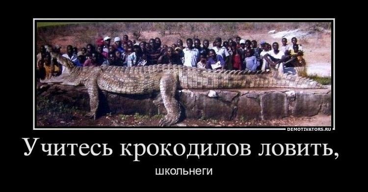 SEO-демотиваторы 2012г - Не растёт кокос?