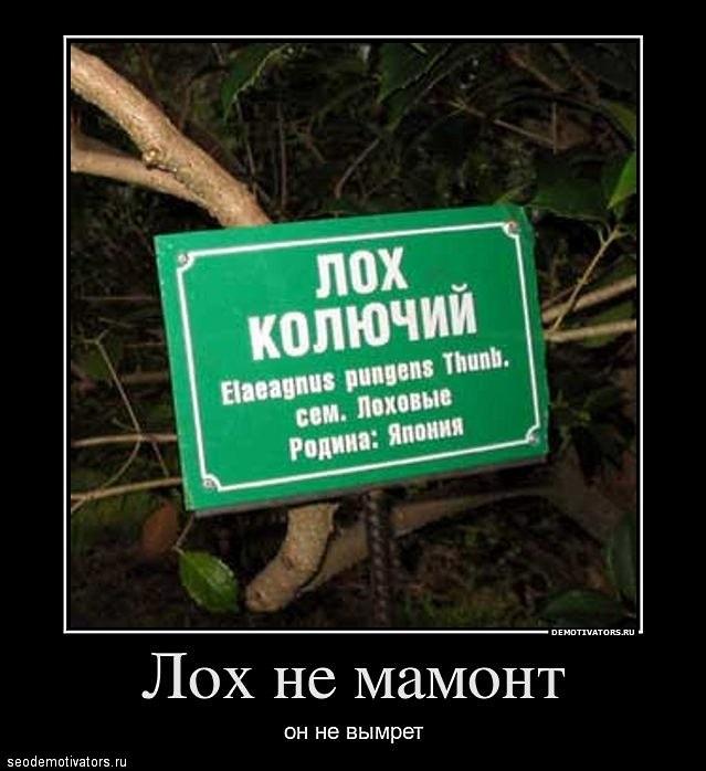 SEO-демотиваторы 2012г - Новые «акции» от ООО «Продвижение» (ООО «Раскрутка»)